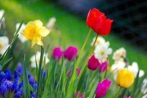 800px-Colorful_spring_garden